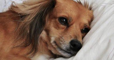 Narkotikahunden Kiko tiltalt for grov korrupsjon og narkotikakriminalitet